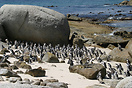 African penguins on the on the beach at Boulders Bay just outside Cape...